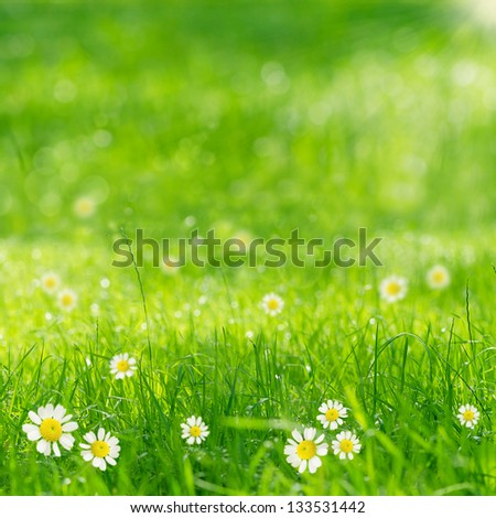 green grass and daisies in the sun - stock photo