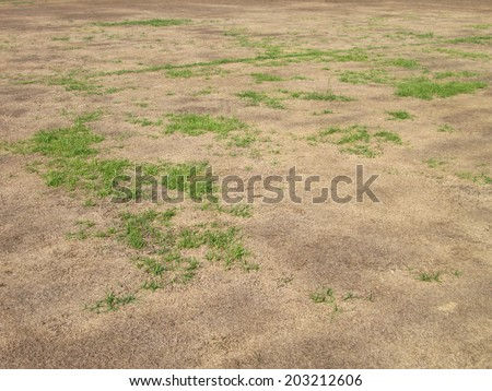 green grass and dry grass - stock photo