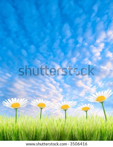 green grass and flower on a white background