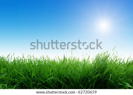 Green grass and morning sun. - stock photo