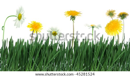 green grass and spring flower over white background - stock photo