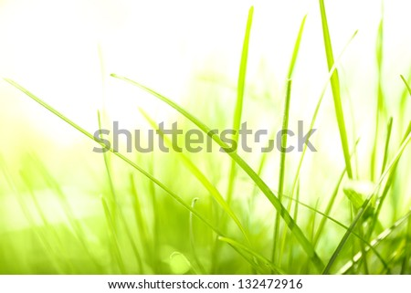 green grass and sunlight - stock photo
