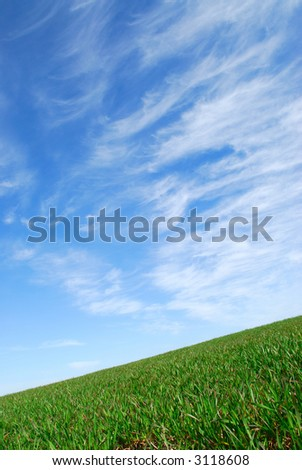 Green grass and the blue sky - stock photo