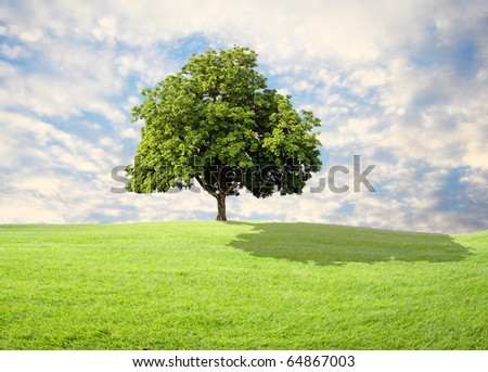 green grass and tree with beautiful sky - stock photo