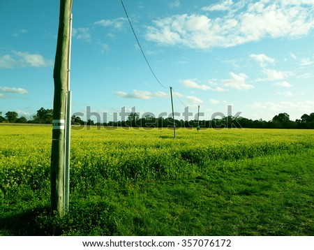 green grass and trees under blue sky - stock photo