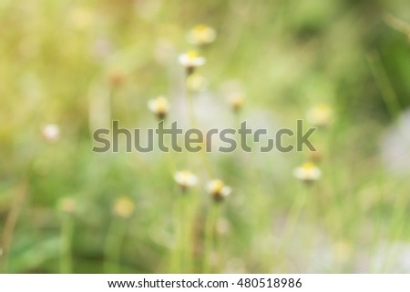 green grass and yellow flowers with sunlight
