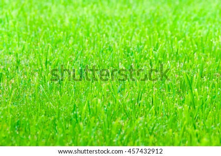 Green grass as texture or background - stock photo