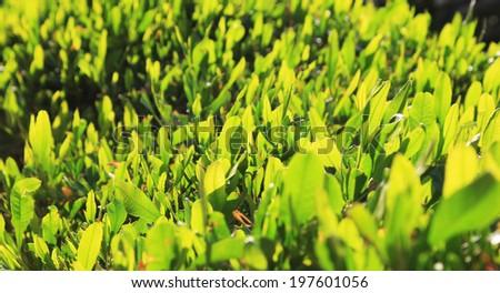 green grass at sun light - stock photo