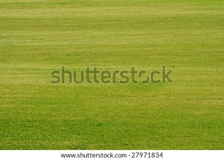 Green grass background Golf - stock photo
