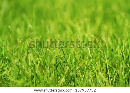 Green grass background macro