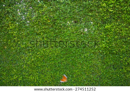 green grass background,nature background - stock photo