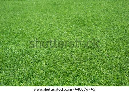 Green grass background texture. - stock photo