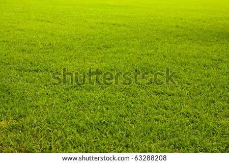 Green grass background texture tilted - stock photo