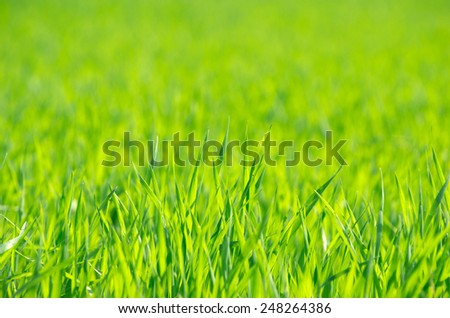 green grass background with selective focus - stock photo