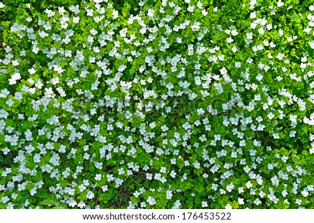 green grass background with small white flowers - stock photo