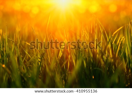 Green grass background with sun beam.