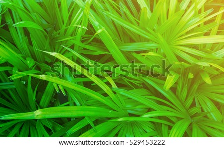 Green grass background with water drops