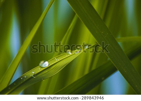 Green grass background with water drops hanging on the leaves being backlit by the sun in the morning. Macro image. - stock photo