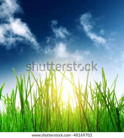 Green grass blue sky and sunlight - stock photo