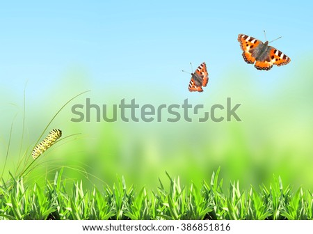 Green grass, caterpillar and butterfly on nature blurred background - stock photo