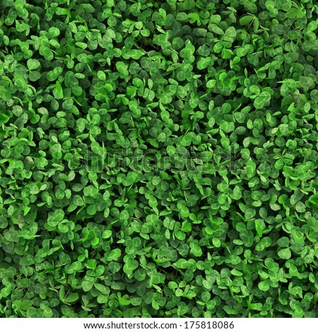 Green grass clover seamless texture - stock photo