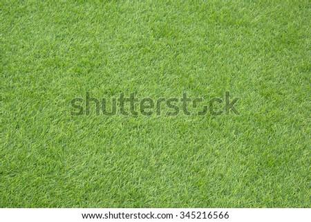 Green grass field. - stock photo