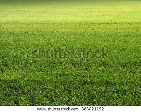Green grass field background, meadow texture - stock photo