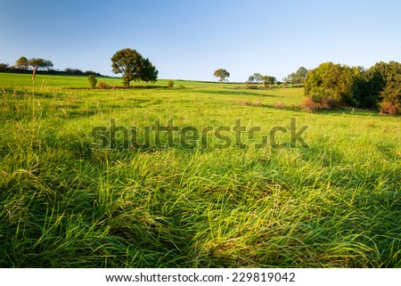 green grass field during the sunset - stock photo