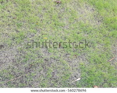 Green grass field texture background