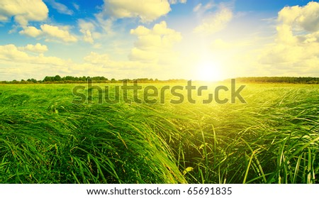 Green grass field under sunset sun on blue sky. The larch forest on background. - stock photo