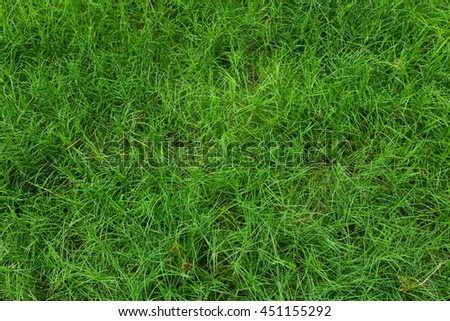 Green grass field with close up.
