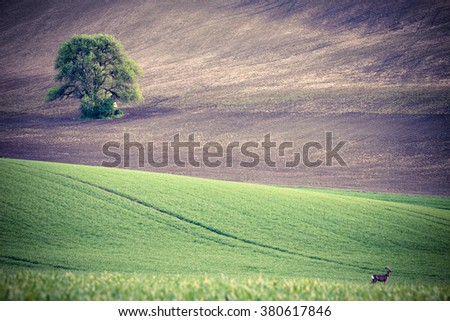 Green grass fields and roe - stock photo
