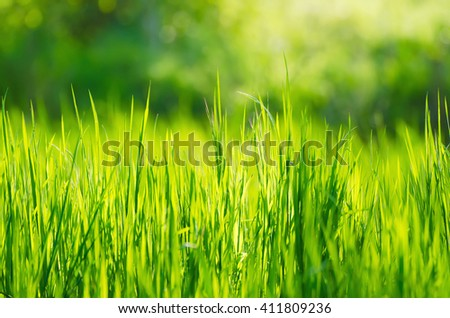 Green grass fields  suitable for backgrounds or wallpapers, natural seasonal landscape.  - stock photo