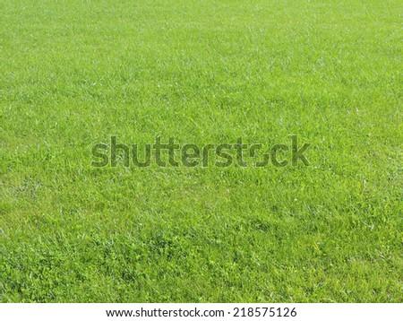 Green grass. Grass lawn. - stock photo
