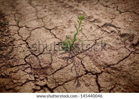 Green grass growing through dry cracks. Shallow DOF, focus on plant. - stock photo