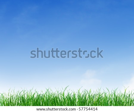 Green grass growing under clear blue sky background - stock photo
