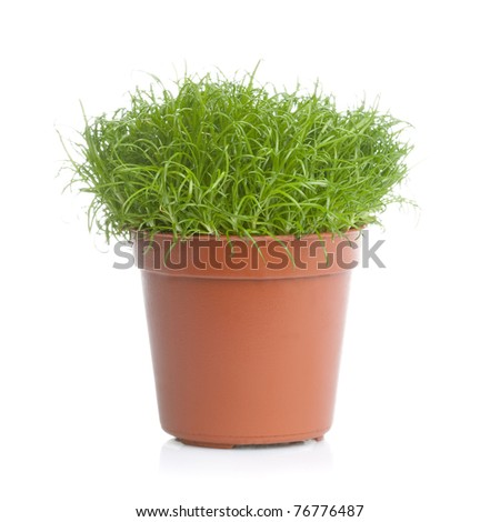 Green grass in a brown pot isolated over white background