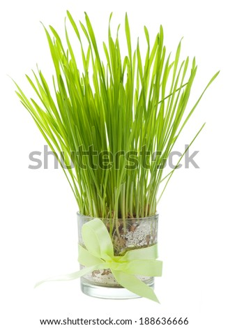 Green grass in a glass tied with a ribbon isolated on white  - stock photo