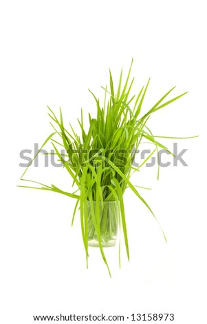 Green grass in cup isolated on white background - stock photo