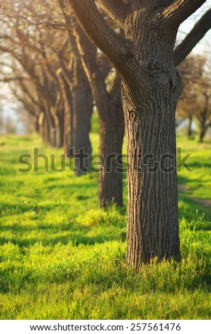 Green grass in park. Spring mood time. - stock photo