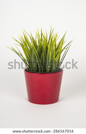 Green grass in red porcelain pot - stock photo