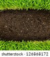 green grass in soil - stock photo