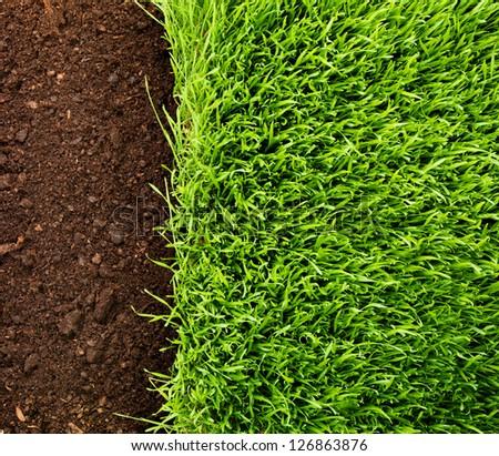 green grass in soil - stock photo