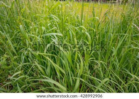 green grass in summer - stock photo