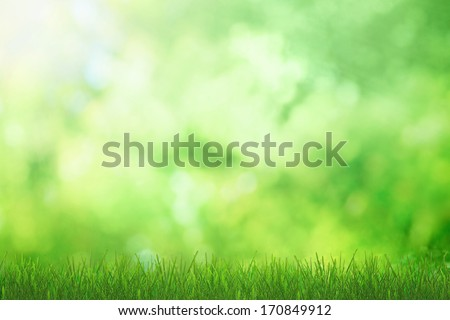 Green grass in sunlight of nature