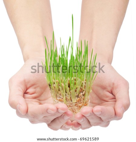 Green grass in woman hands isolated on white - stock photo