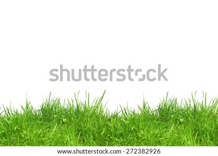 Green grass isolated in the field - stock photo
