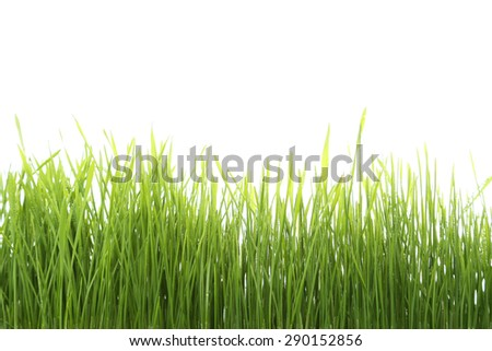 Green grass isolated on white - stock photo