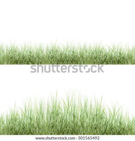 green grass ,isolated on white background. - stock photo