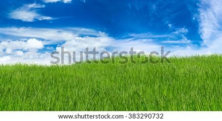 green grass landscape on blue cloudy sky - stock photo